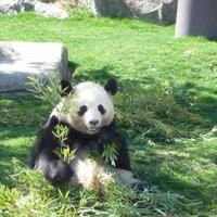 かわいいパンダに会いに行こう♪和歌山県【白浜】旅行プラン
