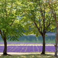 ベストシーズン到来!夏の北海道【富良野・美瑛】に広がるラベンダーとお花畑巡り*