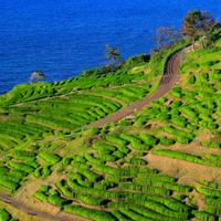 里山と水田が織りなす風景に魅せられて【日本の棚田百選/東海・北陸地方編】