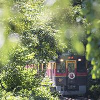 大自然の中を駆け抜ける。【トロッコ列車】が楽しめるお出かけスポット