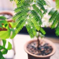 雑貨屋さんでみつけた植物をもっと大きく。初めての【植え替え】にトライしよう♪