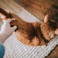 自由に、のんびり、軽やかに。猫先生教えて!《気ままで楽しい生き方》のコツ
