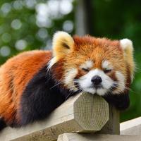 気軽におでかけ気分に♪無料で楽しめる、全国のおすすめ【動物園・水族館】