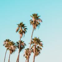 フェス気分で♪おしゃれでカッコイイ【夏のドライブソング】ミュージックリスト10