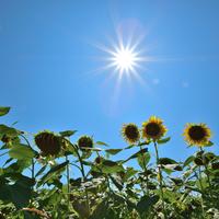 知恵と工夫で真夏を乗り切ろう。一年で一番暑い「大暑(たいしょ)」の過ごし方