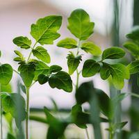 採れてたてをそのままお料理へ。【ベランダ菜園】で美味しい野菜を育ててみよう