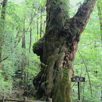 自然を満喫!この夏こそ行きたい【屋久島】世界自然遺産を訪ねる旅