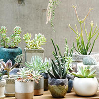 初めてでも安心だよ。【多肉植物】の育て方(植え替えなど)&寄せ植えまとめ