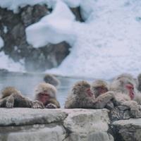 一度は行ってみたい!お猿さんのいる温泉『地獄谷野猿公苑』&美味しい周辺グルメ