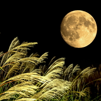 今年は、9月24日。ゆったりした気分で月を愛でる「十五夜(中秋の名月)」のお話