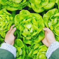 自分で野菜を育ててみない?暮らしに嬉しい変化がおきる『ファーマーデビュー』のすすめ