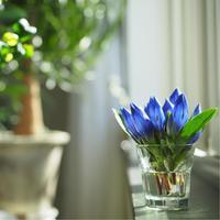 季節の花をお部屋に飾ろう*「秋に咲く花」事典 ―花言葉とともに―