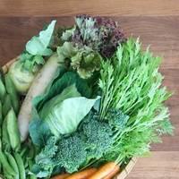これでもう迷わない◎美味しさ長持ち【定番野菜の保存方法】特集