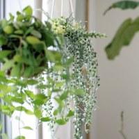 ぐったり植物のほんとの理由って?植物の種類によって変わる『正しい育て方』