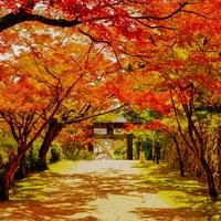 【九州】色づく景色に魅せられて《福岡・佐賀・大分》おすすめ「紅葉スポット」6選