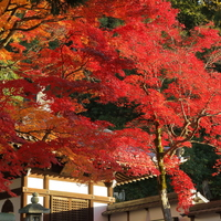 京都の紅葉は夜まで楽しめる☆【ライトアップあり】おすすめ紅葉観光