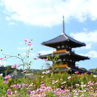 歴史と自然をゆるりと楽しめる《奈良》へ。観光名所と穴場スポット20選