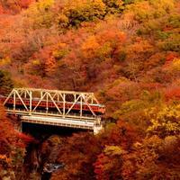 秋を愛でる、特別な大人旅へ。窓から紅葉狩りを楽しめる【もみじ列車】5選