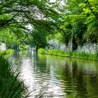 琵琶湖と水郷が織り成す景観が美しい。「近江八幡」で味わう秋と食