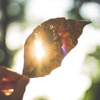 最近、心が動いたのはいつ?コリ固まった心をほぐす日常の小さな輝き