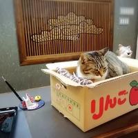 湯上りの「もふもふ」アリます♥  にゃんとも癒される猫のいる温泉宿