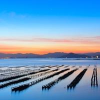 せっかくの広島旅行だから。美味しい牡蠣を食べつくしたい!