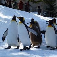大人も子どもも大満足♪出かける前から【動物園】を楽しむガイド