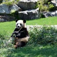 かわいいパンダも世界遺産も。【和歌山観光】ここだけを訪ねる旅