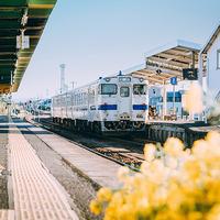 市電&バス乗り放題!観光地を賢くめぐる【鹿児島おすすめモデルコース】