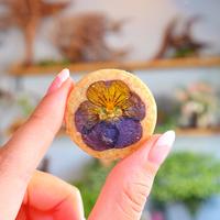 少し早めの「春」を感じる…フラワーモチーフのお菓子たち*