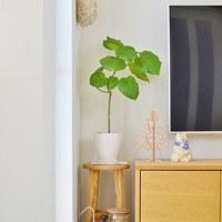 風水に学ぶ「観葉植物」のインテリア術~トイレや玄関・リビングに置いて運気UP♪~