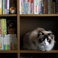 """「猫好きさん」なら一度は読みたい。「猫」を取り巻く""""純文学小説5選"""""""