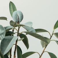 空気もごちそう♪深呼吸したくなる「おいしい空気」をつくる観葉植物の力&暮らしのコツ