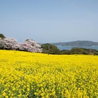咲きほこる花々にきっと癒される♪福岡市内から10分の別世界『能古島』を訪れよう!