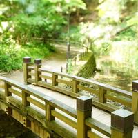 暖かくなったら、緑あふれる都内の渓谷へ*「等々力渓谷」お散歩案内