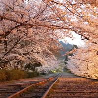 お気に入りの場所で特別な時間を。【京都】桜の名所、集めました