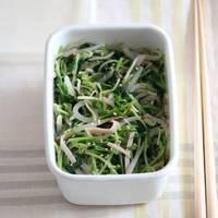 ぐんぐん再生するエコな野菜♪おうちで簡単「豆苗」の栽培方法のコツ&節約レシピ