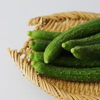 『きゅうり』は家庭菜園で採れたてをいただこう◎すくすく成長する育て方のヒント