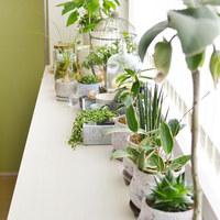 この春はインテリアグリーンと一緒に暮らそう。素敵な置き方のコツ