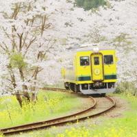 可愛い鉄道で巡る【房総半島】観光、温泉、海鮮、道の駅…いろんな魅力をまるっとガイド
