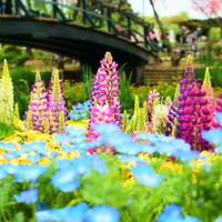 春~初夏にかけて訪れたい「花」を楽しむスポット【関東編】