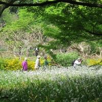 """緑と水と、花々と。""""わたしのリセット旅-皇居東御苑編-"""""""