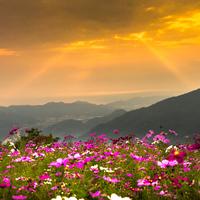 秋ならではの可憐な花に魅せられて…近畿地方のコスモス畑を訪れませんか?