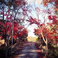 爽やかな空気に包まれながらハイキングを楽しみませんか…近畿地方のハイキングスポット9選