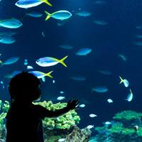 【九州】海の生物たちに癒されて♪《福岡・大分・長崎》のおすすめ「水族館」特集
