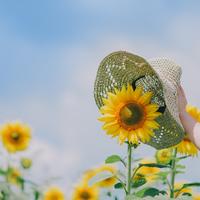 夏の思い出の「ひとコマ」を残しに。ひまわり畑に出かけてみませんか?