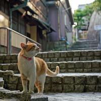 """のんびり、気ままな """"心のゆとり""""を学びに。【猫に会える街】に出掛けよう"""