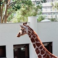 お財布にうれしい♪【関東】無料で楽しめる動物園6選