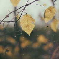 なんとなく心寂しい秋に。ブランケットみたいにあたたかく寄り添う「本&音楽」12選