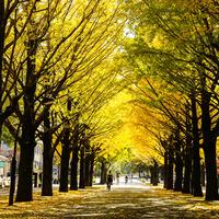 秋色のじゅうたんにうっとり。紅葉が美しい「都内の並木道」5選